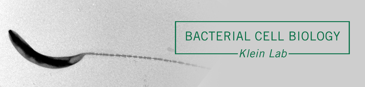Bacterial Cell Biology, Klein Lab