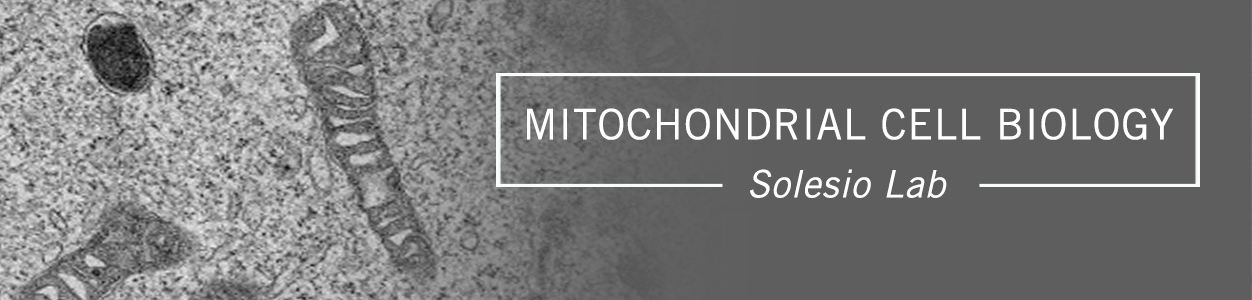Mitochondrial Cell Biology, Solesio Lab
